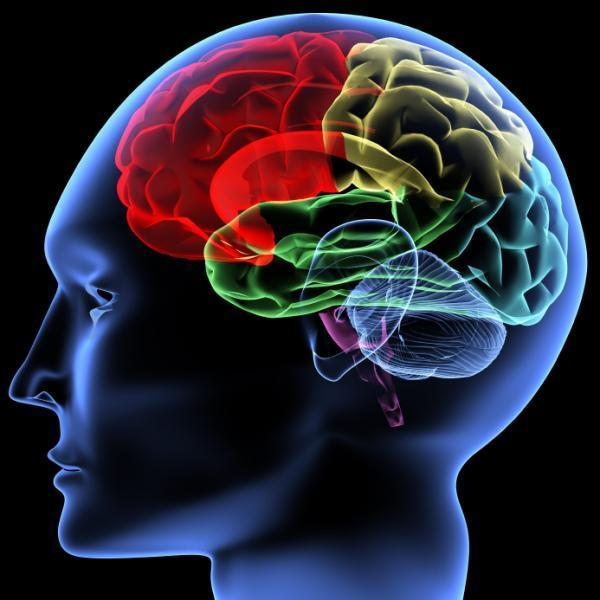 Hypertension Tied To Changes In The Brain