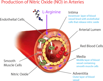 Nitric Oxide – It's Kind of a Big Deal | Lower Blood Pressure ...